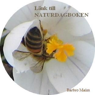 Länk till naturdagbok