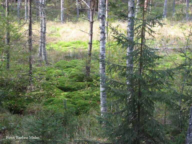 Skog om hösten